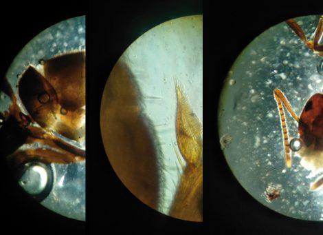 Atelier sciences et observation au microscope